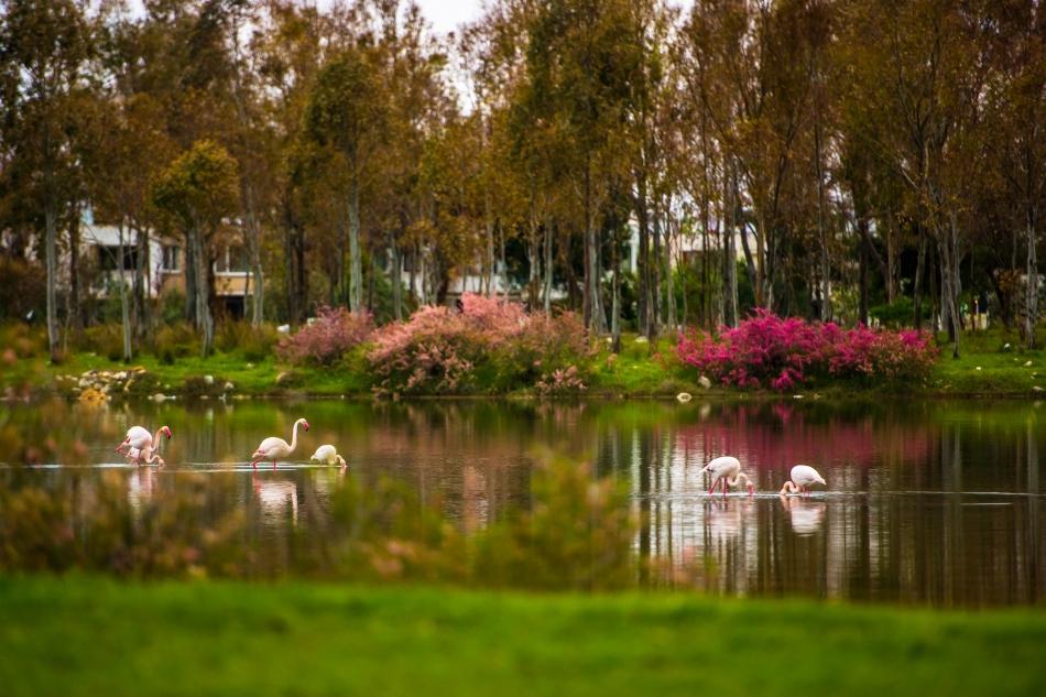 2021/01/1609587319_aliaga'nin_flamingolarindan_kartpostallik_goeruentueler_(6).jpg