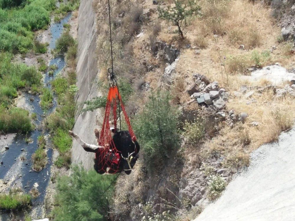 Aliağa'da baraja düşen dana kurtarıldı