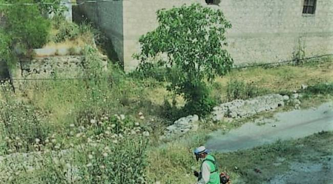 Aliağa Belediyesi yabani ot ve haşere İle mücadelerine aralıksız devam ediyor