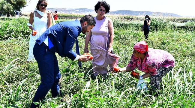 Foça Belediyesi Tarım Bahçesi'nde İlk Hasat
