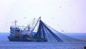 Balık sezonu 1 Eylül'de başlıyor