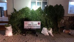 İzmir'de Bin 380 kök Hint keneviri ile 5 Adet ruhsatsız silah ele geçirildi