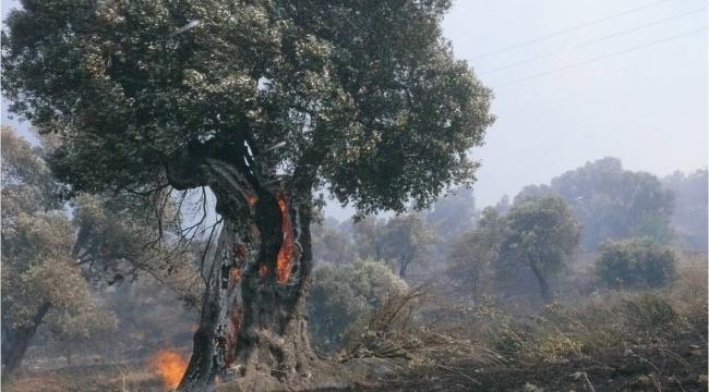 İzmir ve Manisa'da 182 Adet Orman Dışı, Kırsal Yangına Müdahale Edildi .