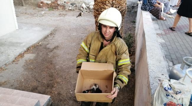 Aliağa'da alevlerin arasında kalan 5 yavru kedi, itfaiye ekiplerince kurtarıldı