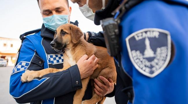 Aracın çarptığı yavru köpeği zabıta sahiplendi