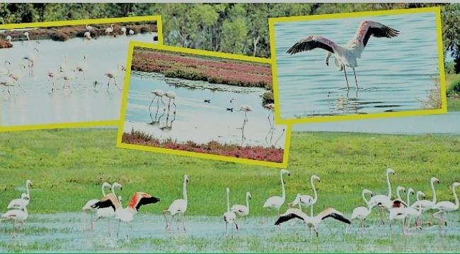 Aliağa Kuş Cennetinde Kartpostallık Görüntüler