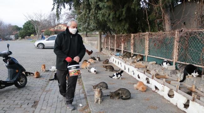 FOÇALI TURİZMCİDEN PANDEMİ MAĞDURU KEDİLERE BARINAK
