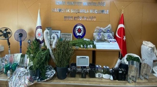 İzmir'de kenevir operasyonu: 10 gözaltı