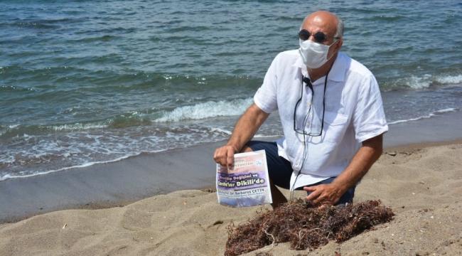 Erdek'de deniz salyası, Dikili 'de Sargassum tehdidi