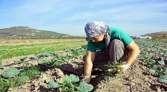 Pandemi, tarımın sürdürülebilirliğini tehdit ediyor!