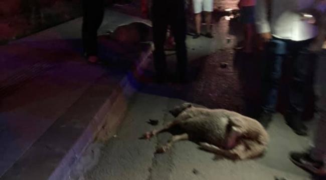Otomobil koyun sürüsüne çarptı 1 kişi yaralandı